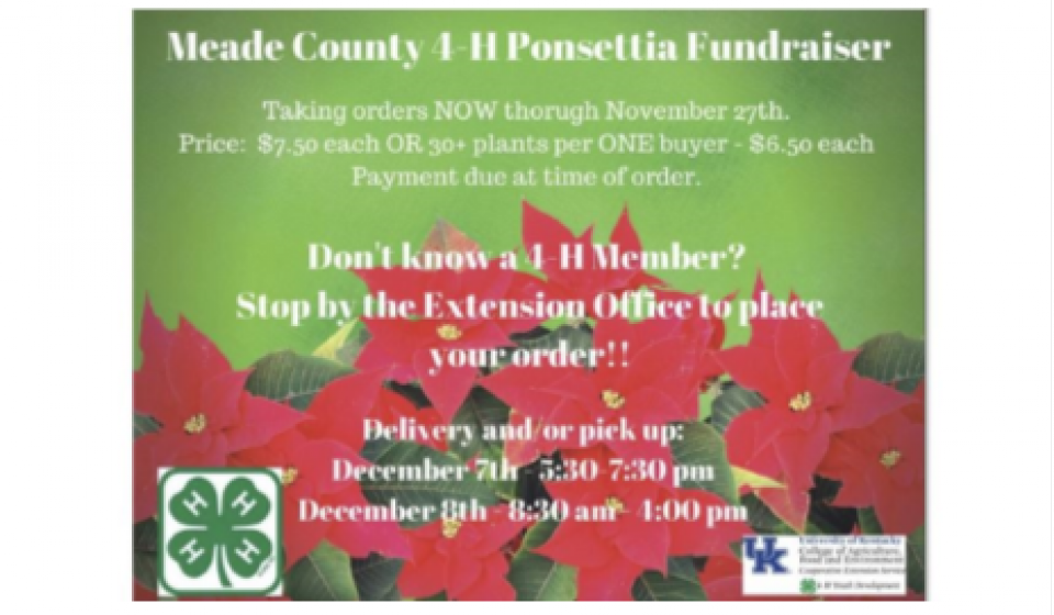 4-H Poinsettia Sales